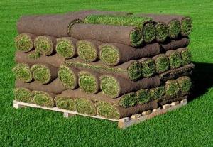 sod rolls, london sod, ontario sod, ontario sod rolls, ontario sod farm, sod farm, sod pallet